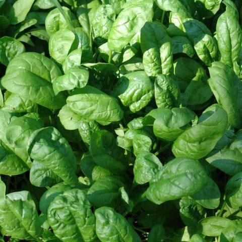 Include aceste 5 legume în dieta ta pentru a pierde în greutate - Retete de slabit