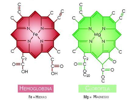 beneficios-clorofila-l-enpcq6