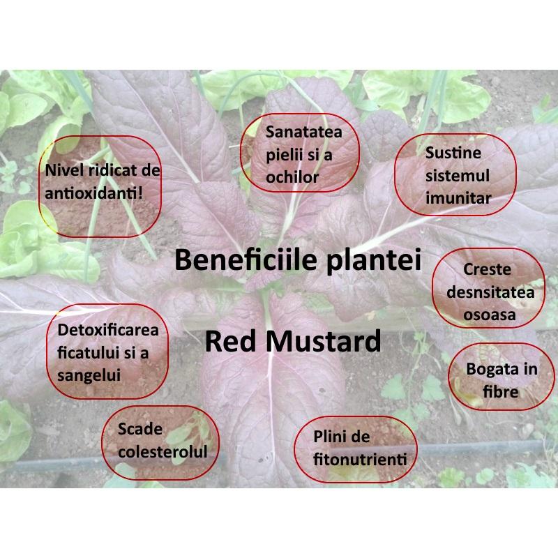 blog Red Mustard